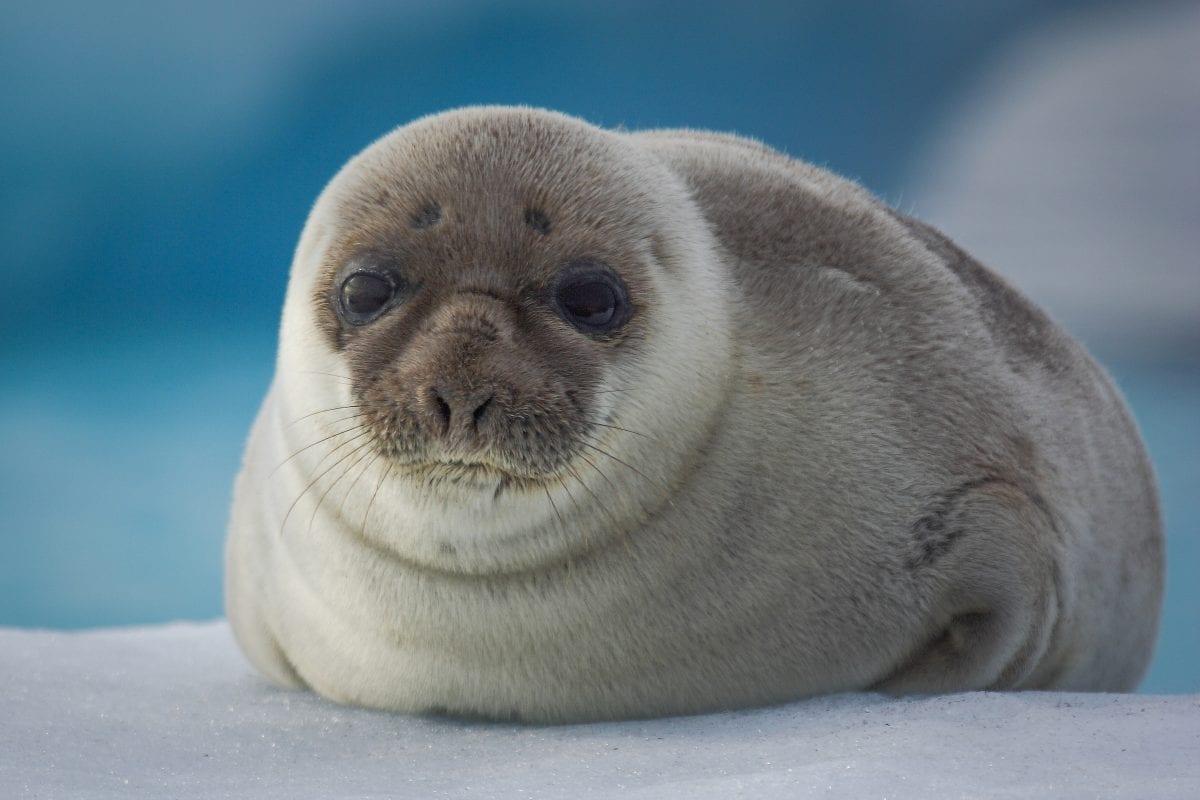 Robben Tiere